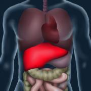 Orgánové transplantace